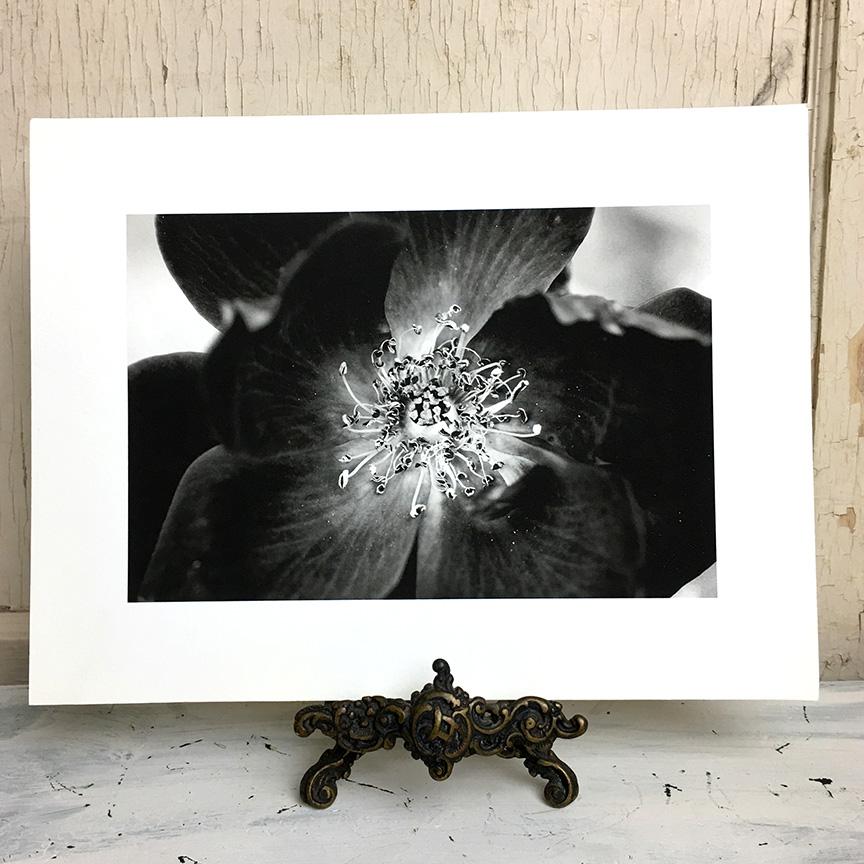 rose black and white fine art print.jpg