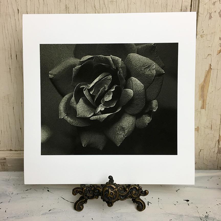 rose fine art photography print monotone.jpg
