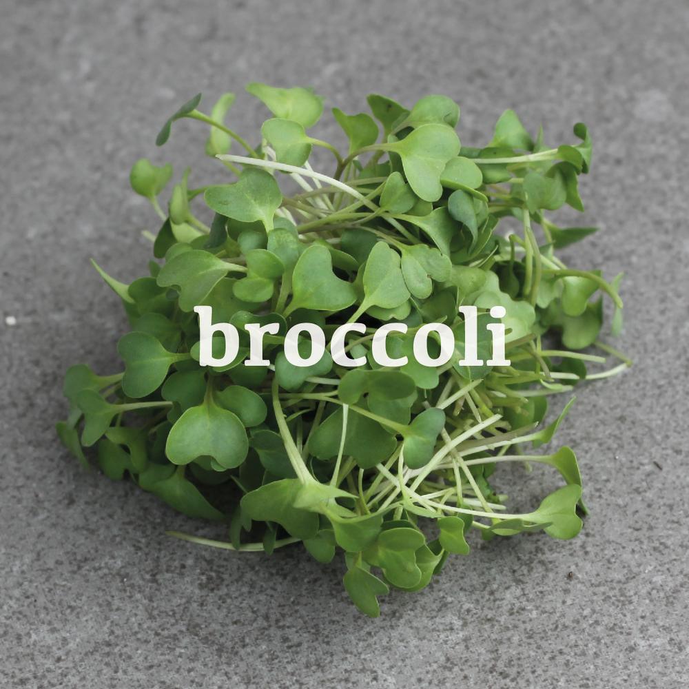 _broccoli-01.jpg