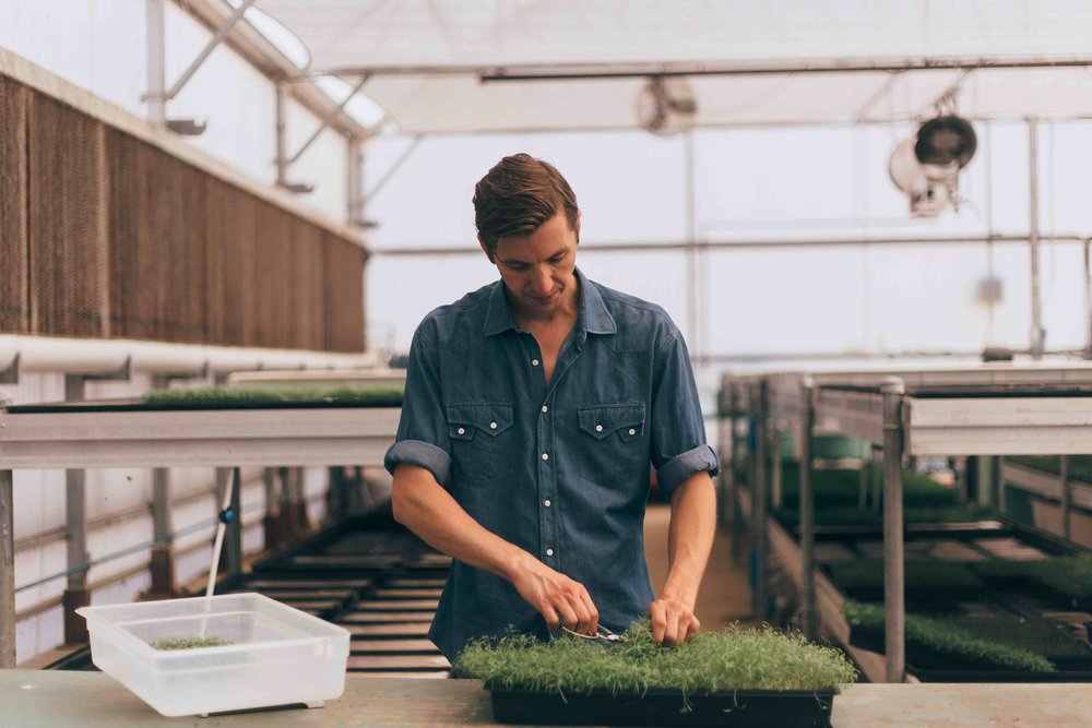 David in greenhouse.jpg