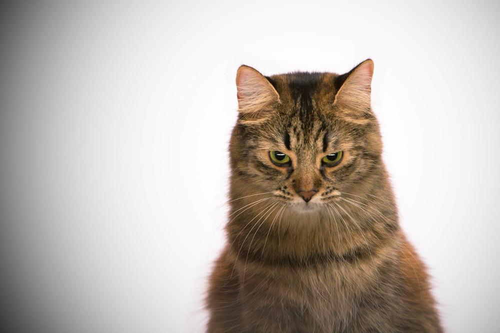 Evil cat is evil.
