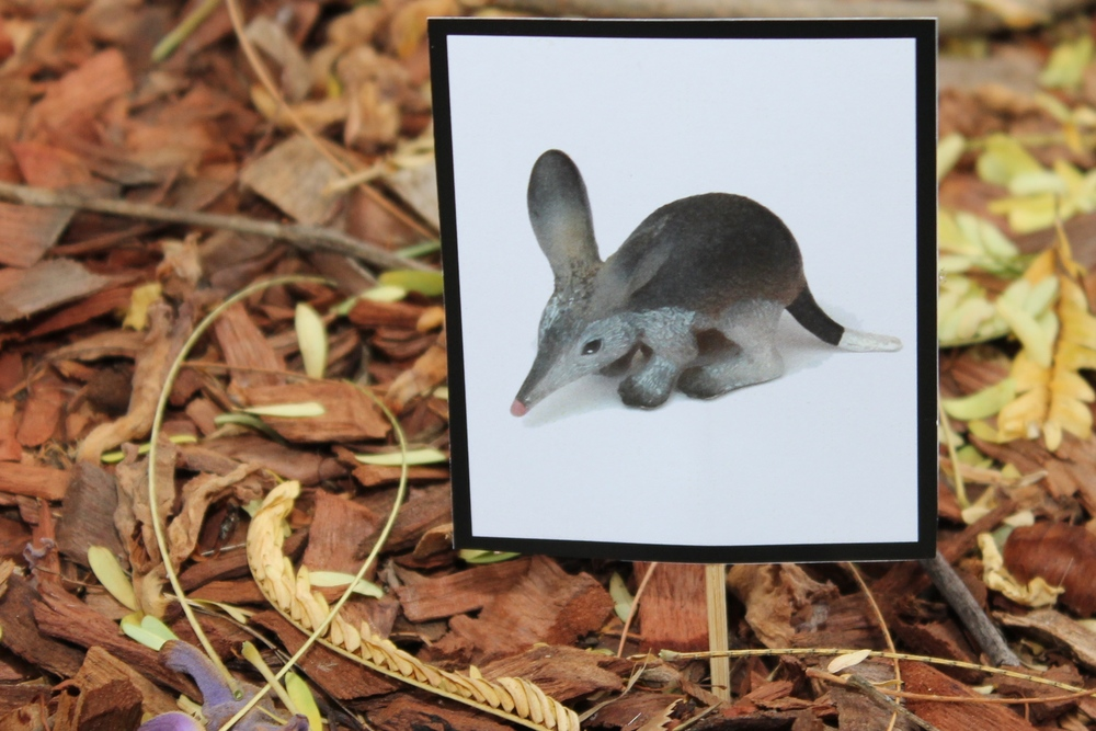Australian Animal Scavenger Hunt Picture cards