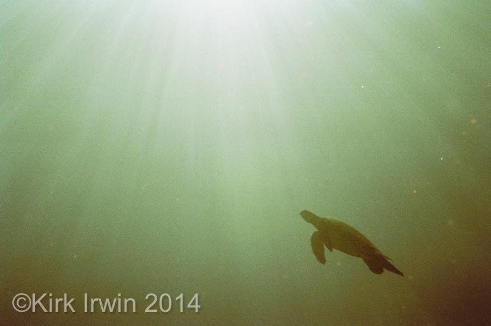 Nikonos Project©Kirk Irwin