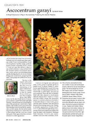 "An article on Vanda garayi (formerly  Ascocentrum garayi) . A parent of several of our currently available hybrids, including  Vanda Alan Ashe Patterson ,  Vanda cristata x V. garayi ,  V. garayi x Vanda miniata 'Mary Motes' CHM/AOS , and  V. Alan Ashe Patterson x V. curvifolia ""Farmlife Rose"" AM/AOS , and involved in the parentage of many more, including Vanda Motes Goldpiece (winner of the silver medal at the 18th World Orchid Conference, Motes Orchids also won the gold medal), Vanda Bartholomew Motes, Vanda Motes Burning Sands, and Vanda Miami Mandarin."