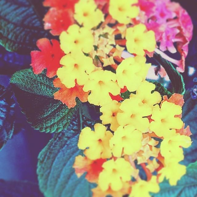 J'adore ces fleurs!