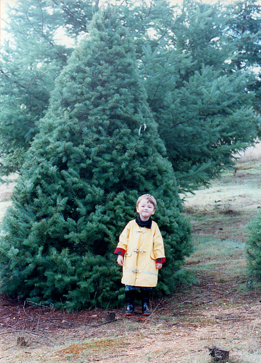 Little Henry, big tree. How the Little Fellows do slip away from us!