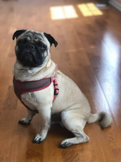 WINSTON # 255 - ADOPTED AUGUST 2018