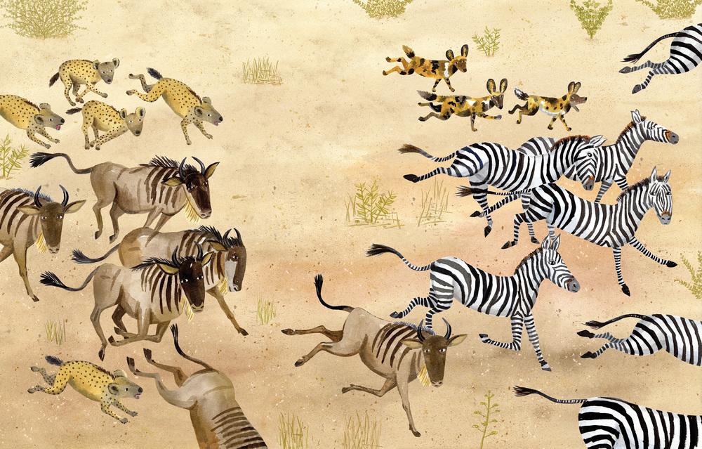 Running Zebras.