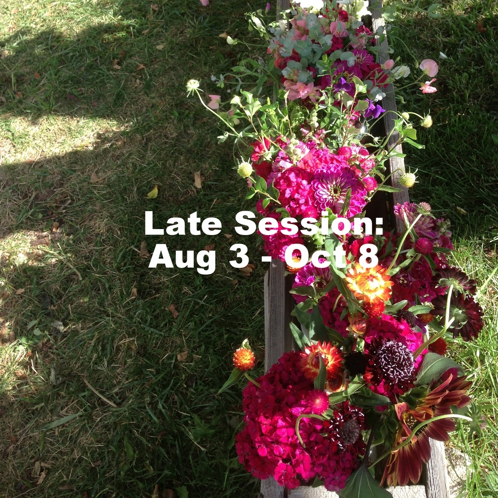Dianthus, zinnias, strawflower, scabiosa, gomphrena, sunflowers, and more from the Late Weekly Bouquet Service in 2014