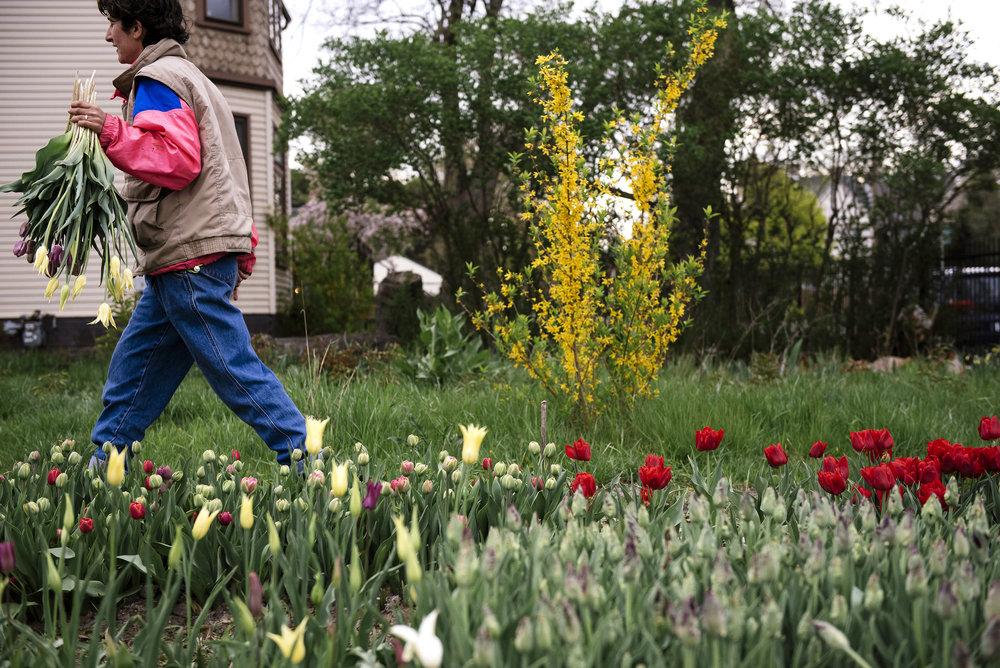 walking with tulips.JPG