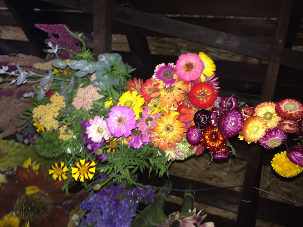 The attic is filling with drying flowers to keep us happy in darker days.