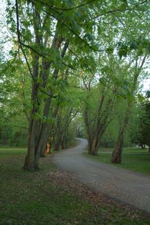 Trees & Roads.jpg