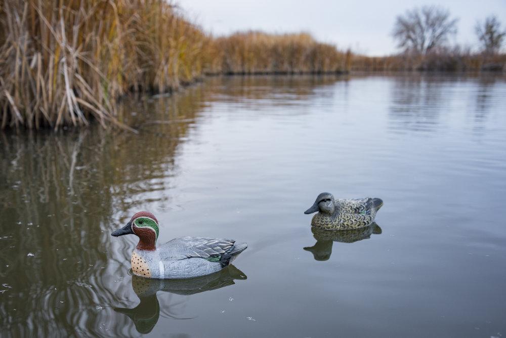 DuckDecoySpreads_AmmoToGo
