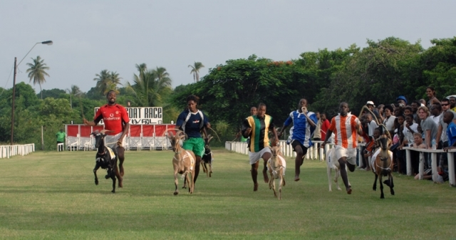 See goat racing