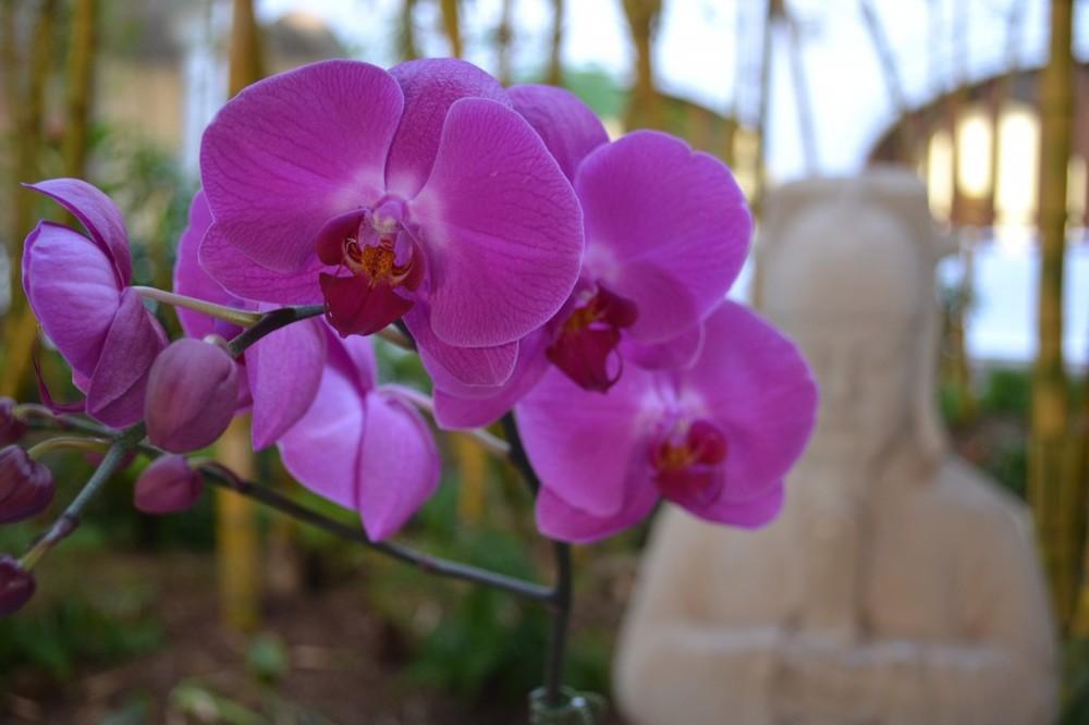 Fairmont Kea Lani – Orchids
