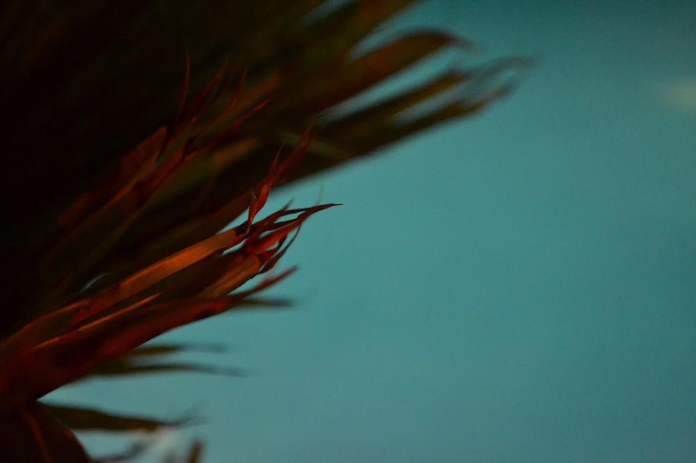 Four Seasons Lanai Manele – Evening