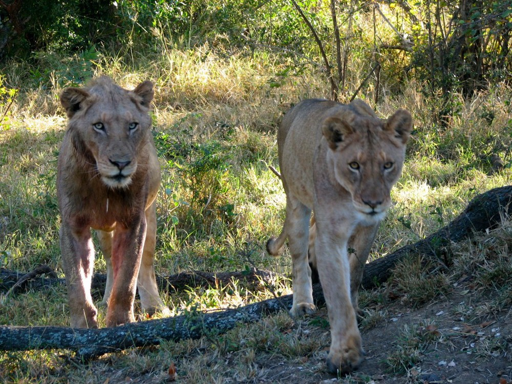 Safari – South Africa