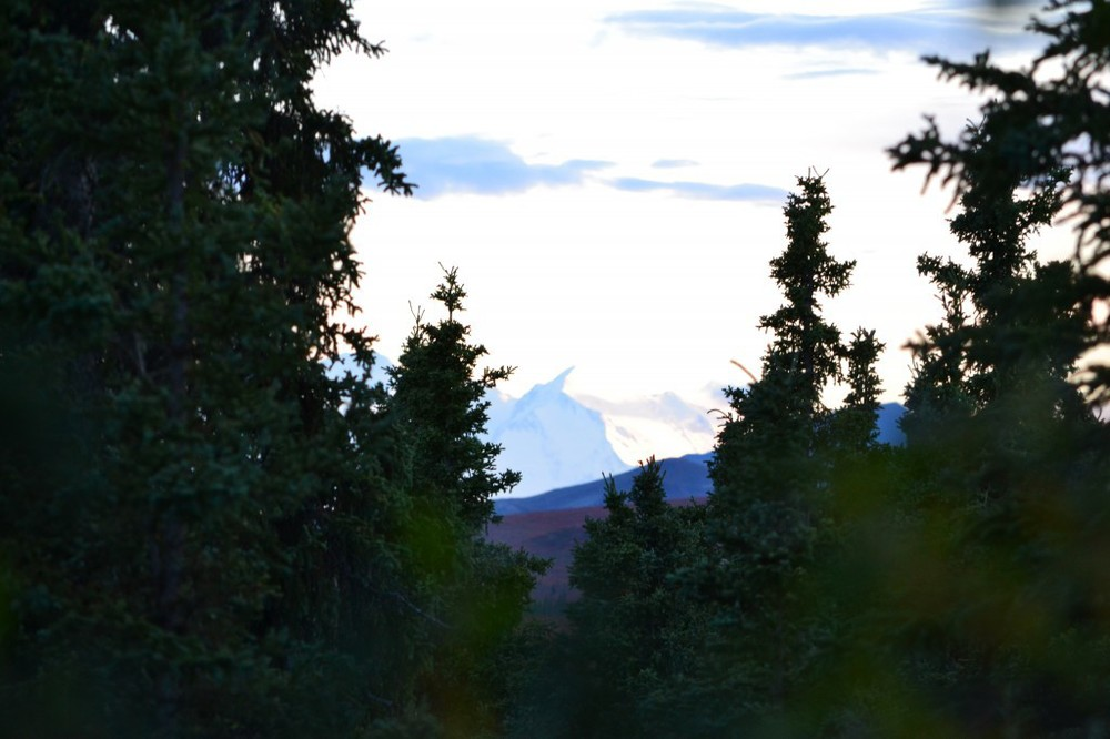 Mount McKinley from Camp