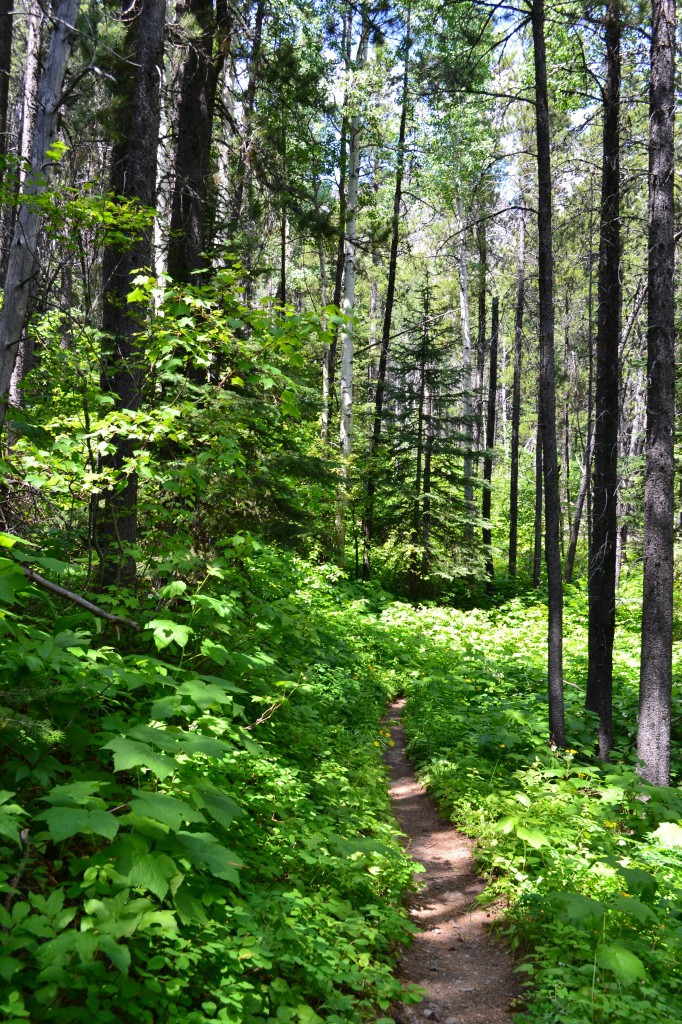 Peace Park Hike - forest