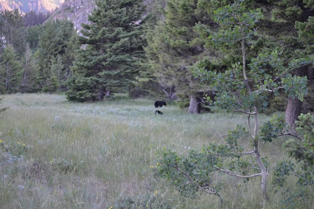 Bear + Cub