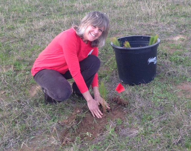 Judy planting pine trees