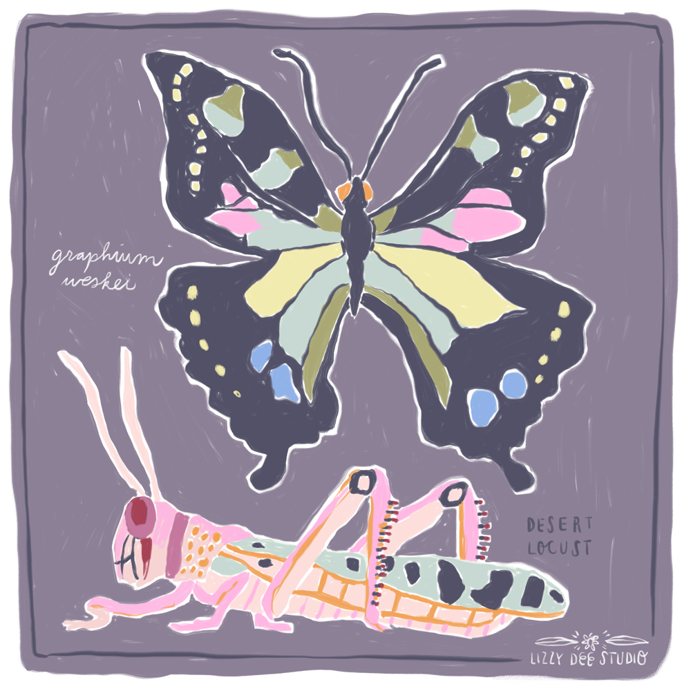 butterfly_insect_Grasshopper_Lizzy_doyle-1.jpg