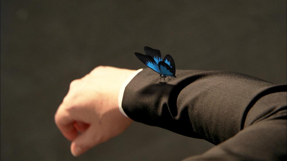 Fringe_Butterflies_07.jpg