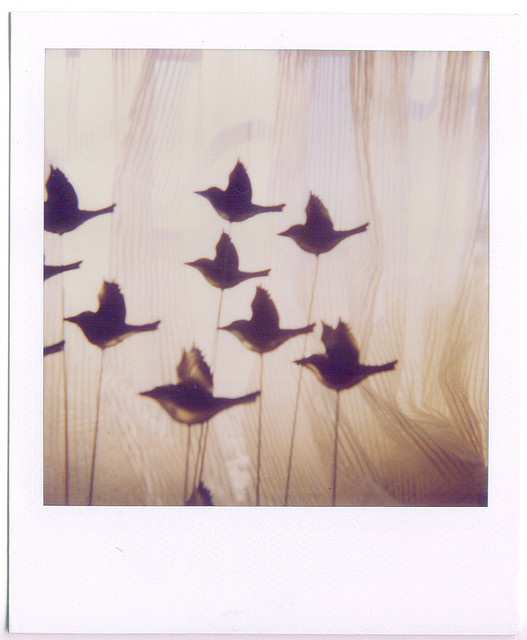 nofearnoplans :      fly away  by  emmily shaw  on Flickr.