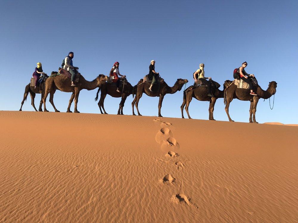 camels_sahara.jpeg