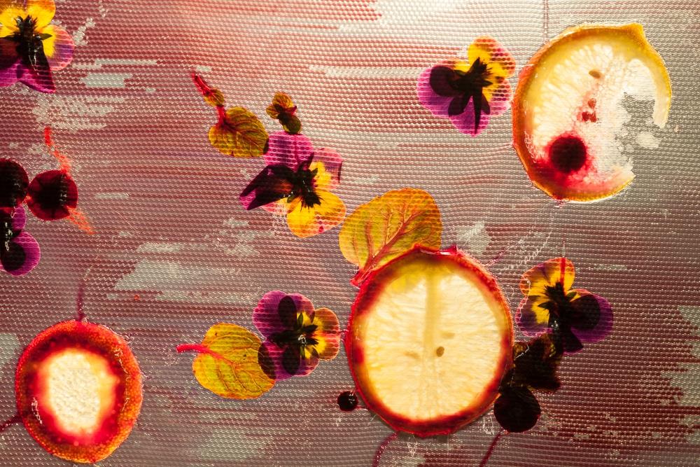Concept by Anna Compagnone