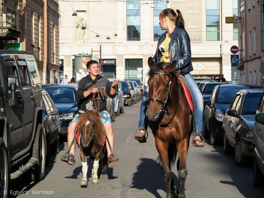 paarden Sint-Petersburg