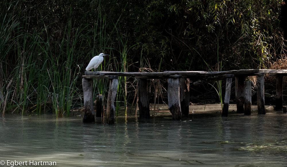 Donau natuurreservaat vogels Vilkovo