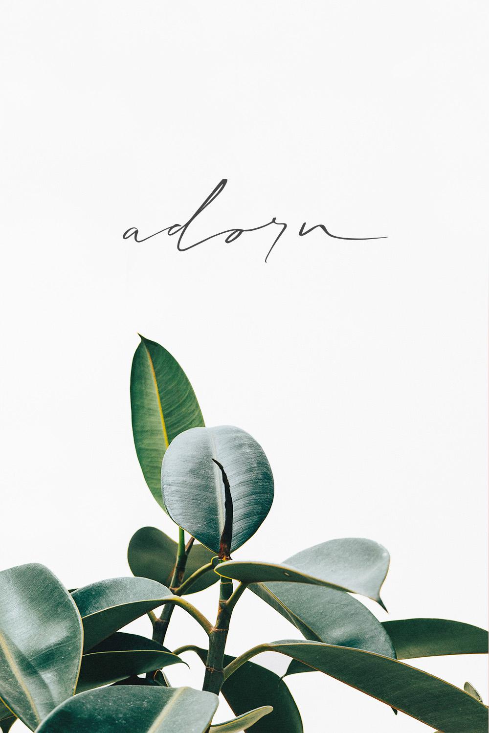 Adorn Studio | trudygeorgina.com