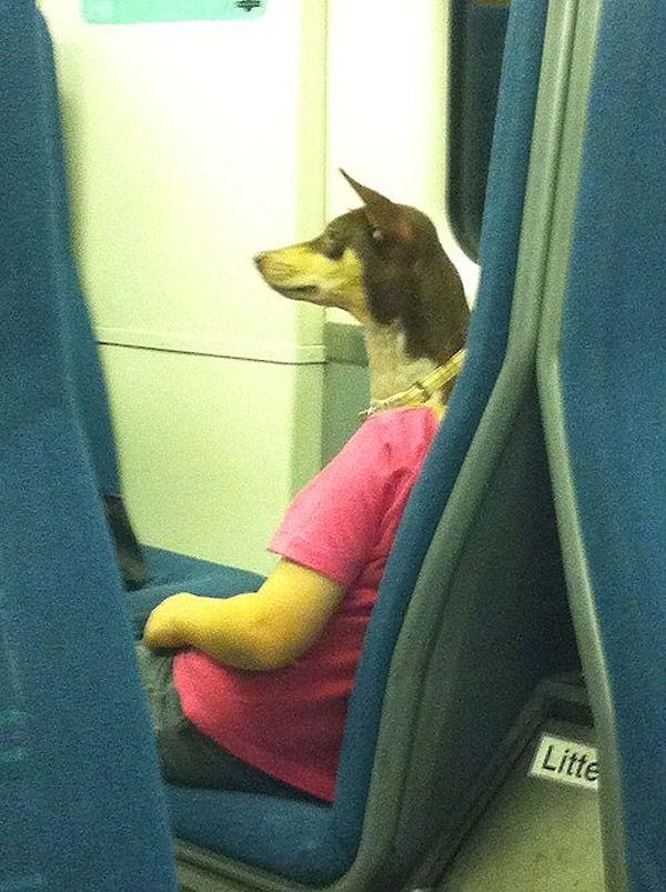 doghead bus.jpg