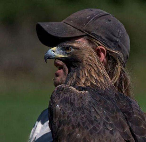 falconnose.jpg