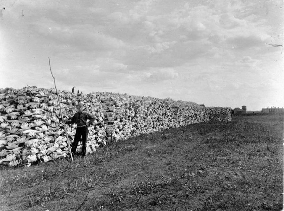 Boy posing in front of buffalo-head wall, Saskatchewan, 1890