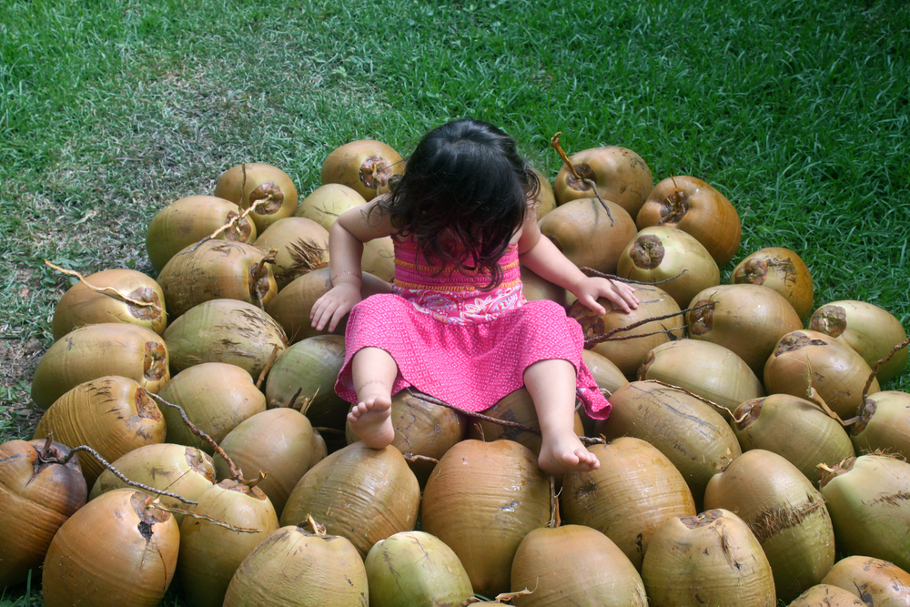St John Coconut Harvest