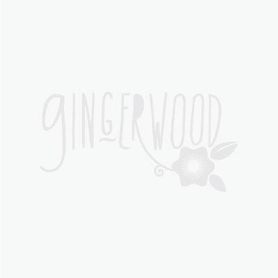 Gingerwood_gray.jpg