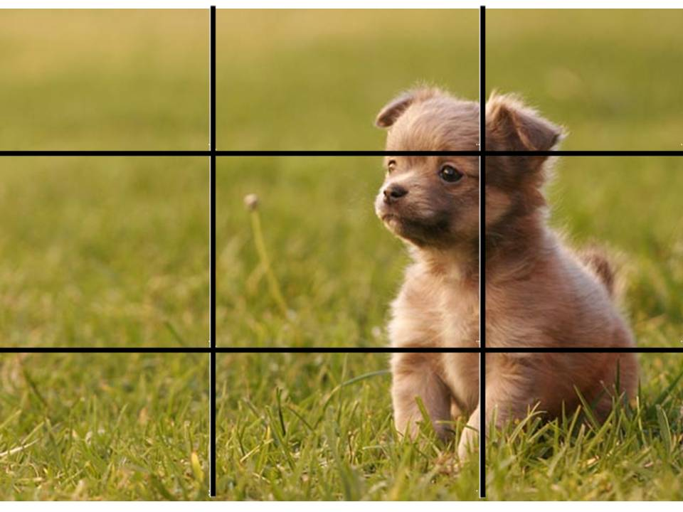 rule-of-thirds-grid.jpg