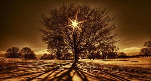 Landscape_Tips_BG.jpg