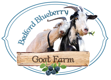 Bedford Blueberry Goat Farm - Grade A Goat Milk Goat Cheese