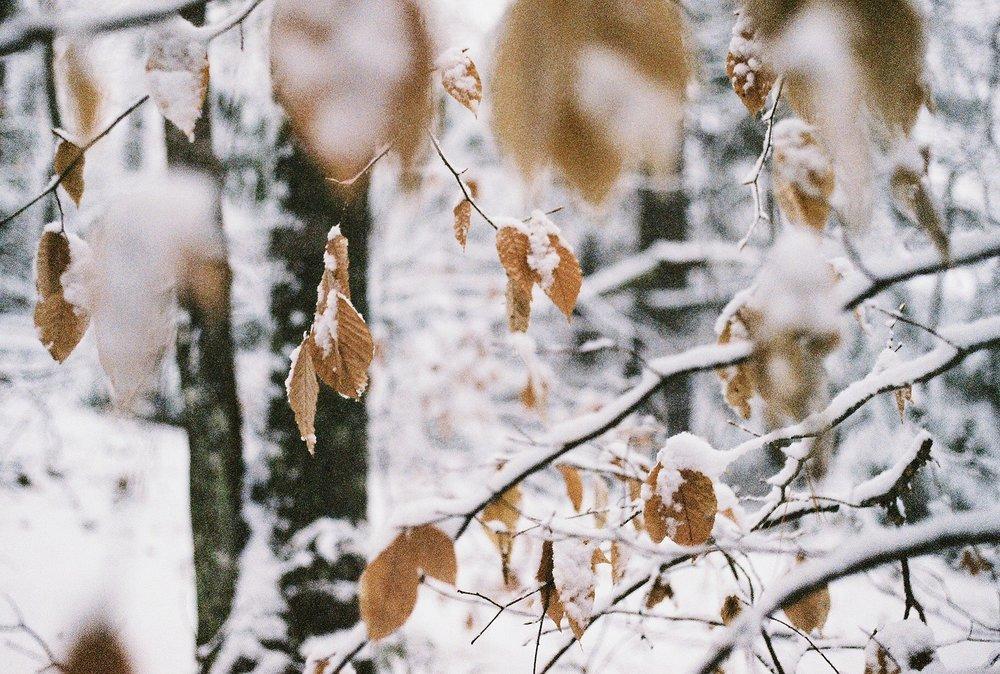 Photo Dec 11, 5 09 48 PM.jpg