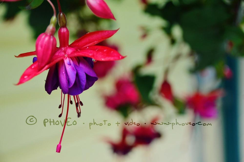 WM_fb51.jpg