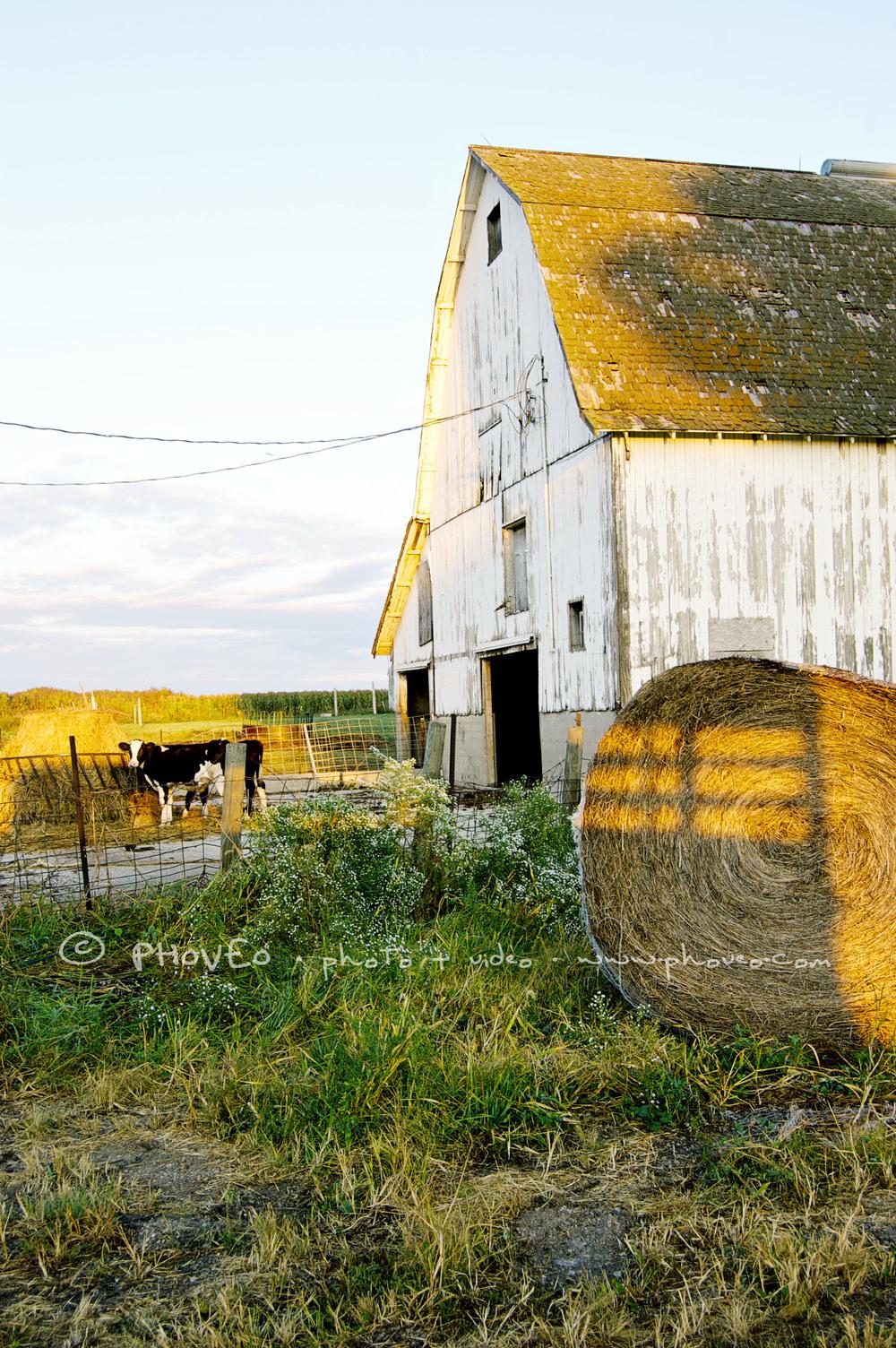 WM_barn21.jpg