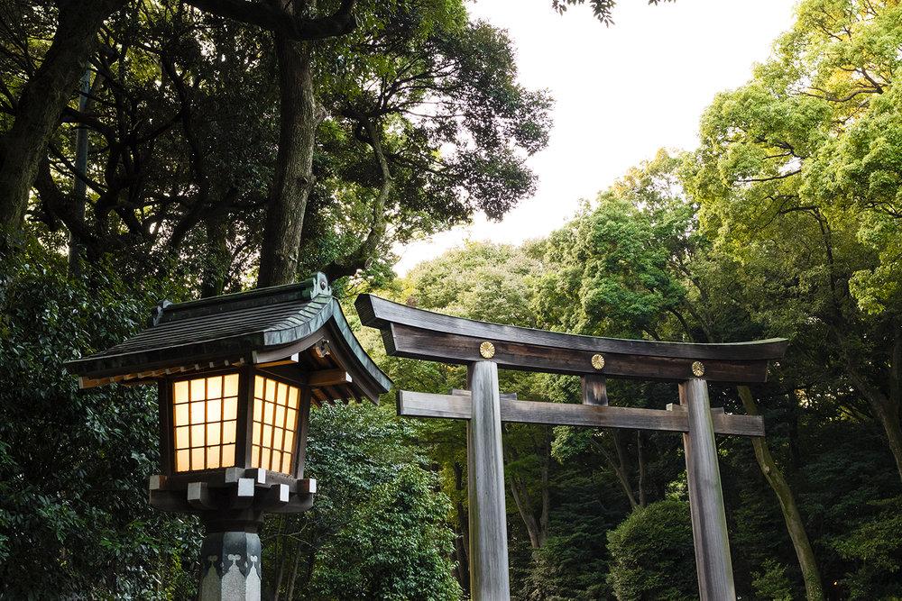 Meiji Jingu Torii.jpg