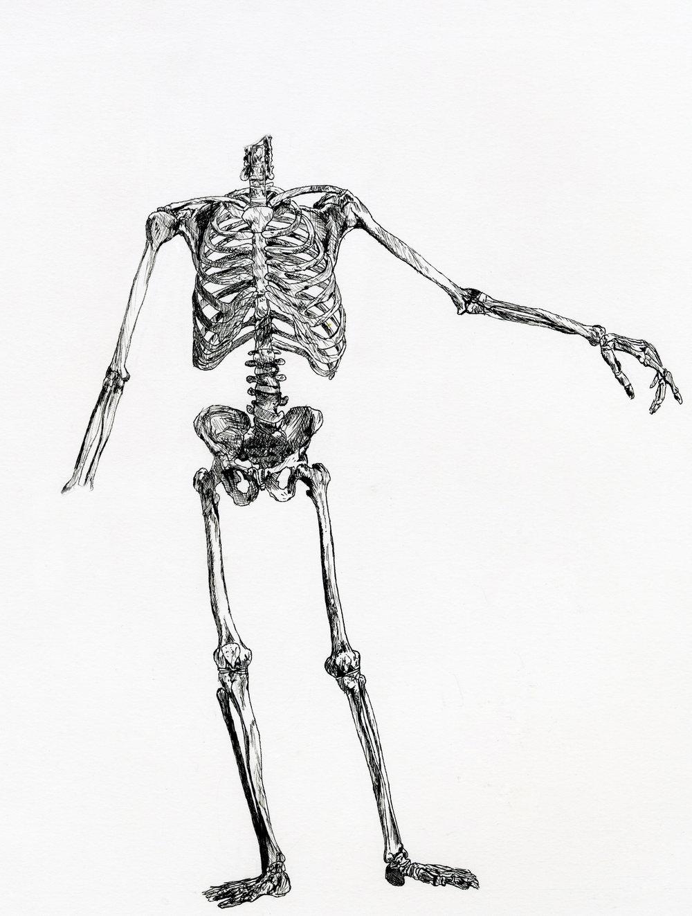 Skeleton drawing (2008)