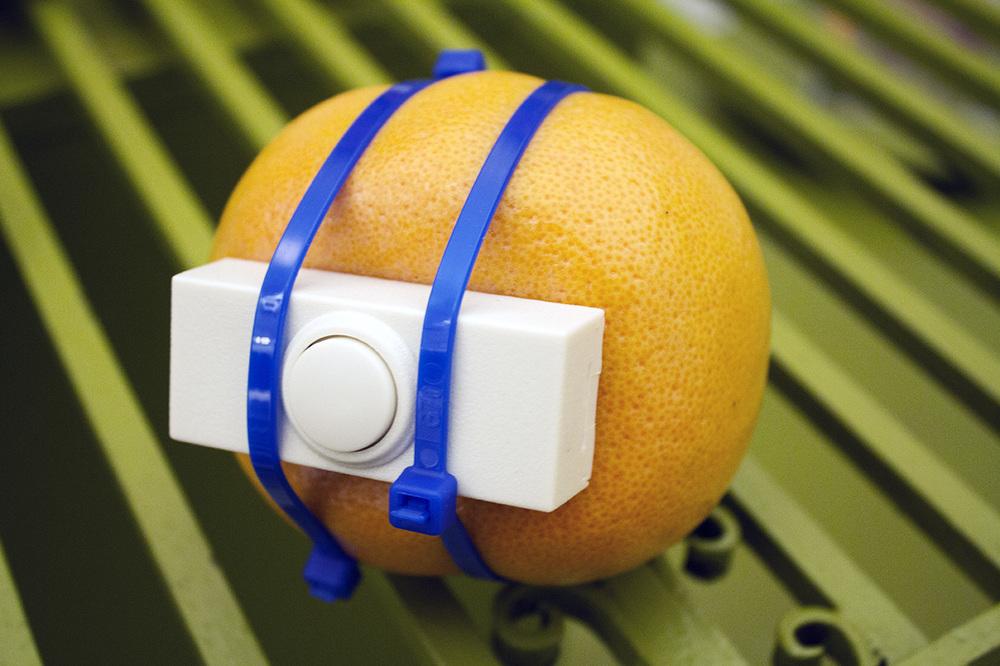 doorbell fruit websize.jpg