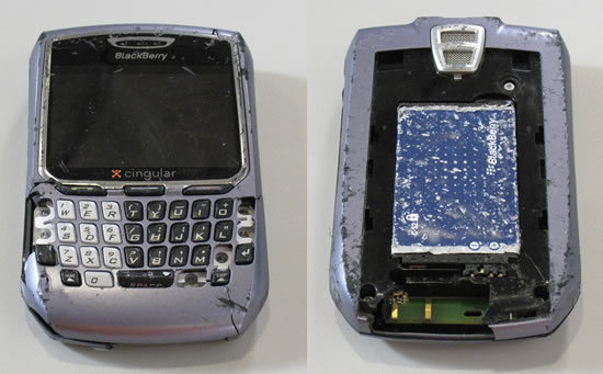 blackberry_dead.jpg