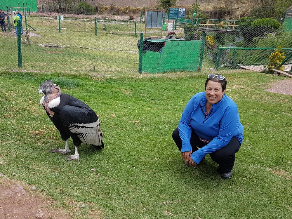 Condor-Peru-2016.jpg