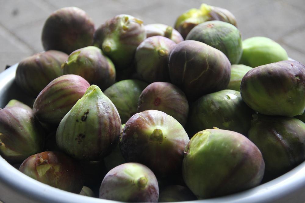 341:365 26-2-14 Figs